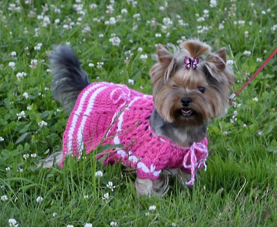 Одежда для собак - сшить самим